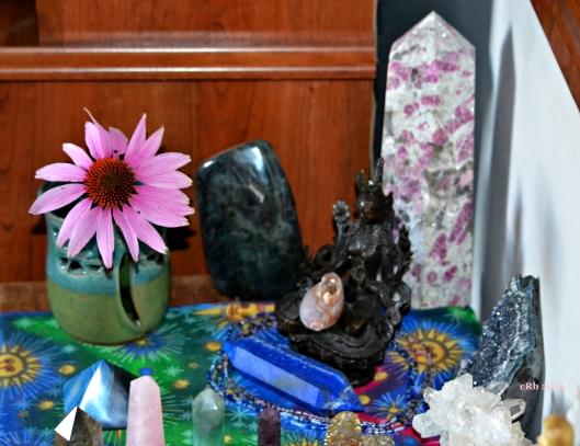 Echinacea Altar