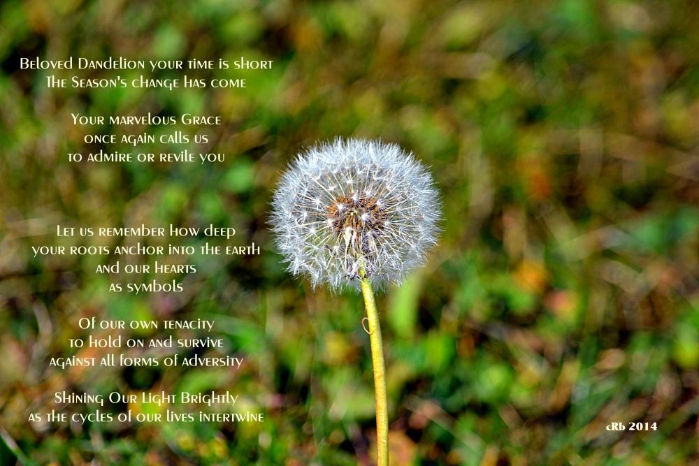 Beloved Dandelion