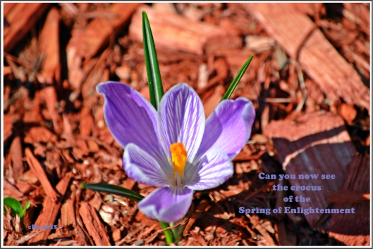 Crocus of Enlightenment