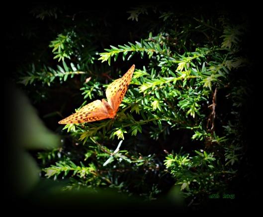 Butterfly 7.20.15