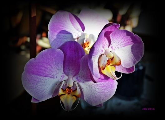 2016_02_17_Orchids Open