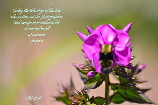 Bee Blessing