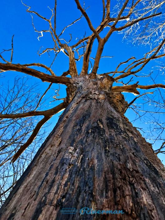 Sacred Oak 2018-03-27.jpg