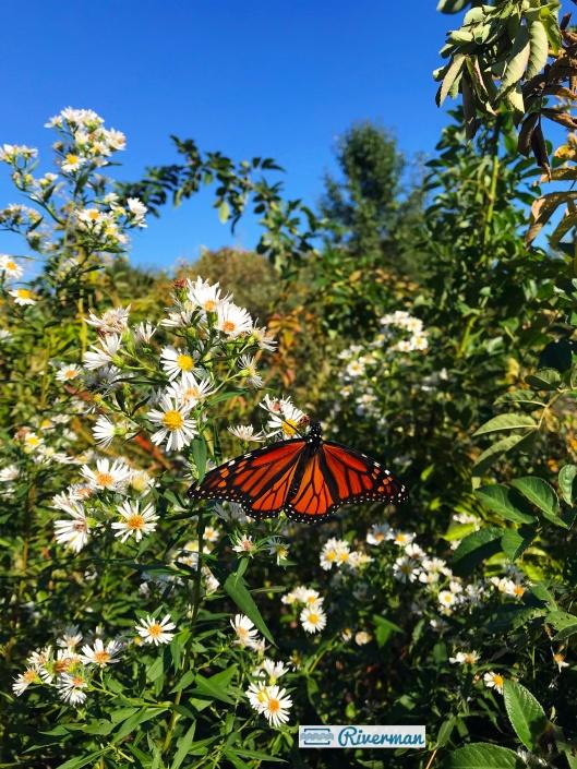 Butterfly 9.29.18