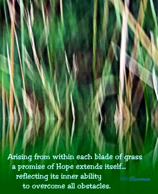 Blades of Hope.jpg