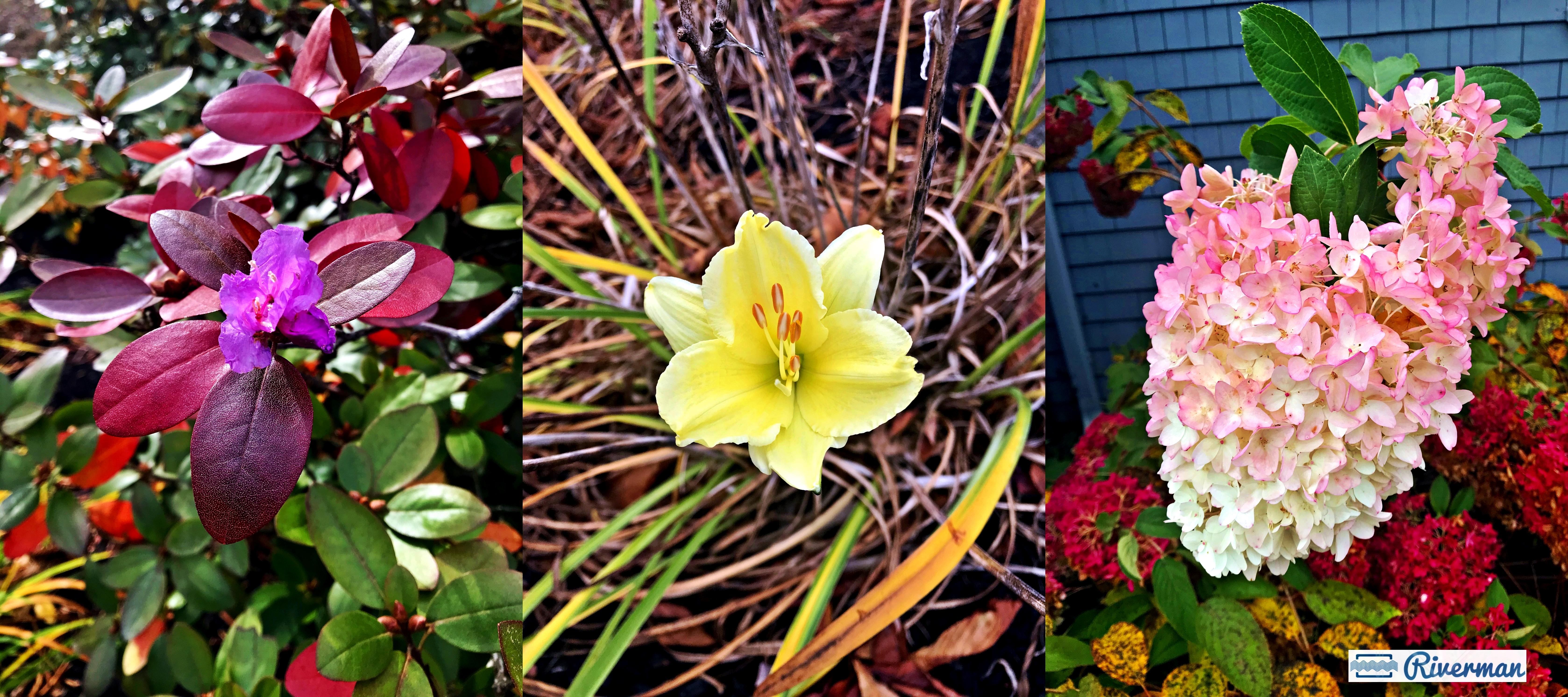 October Full Moon Flowers